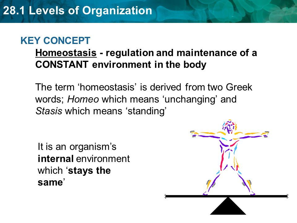 KEY CONCEPT Homeostasis - regulation and maintenance of a CONSTANT environment in the body