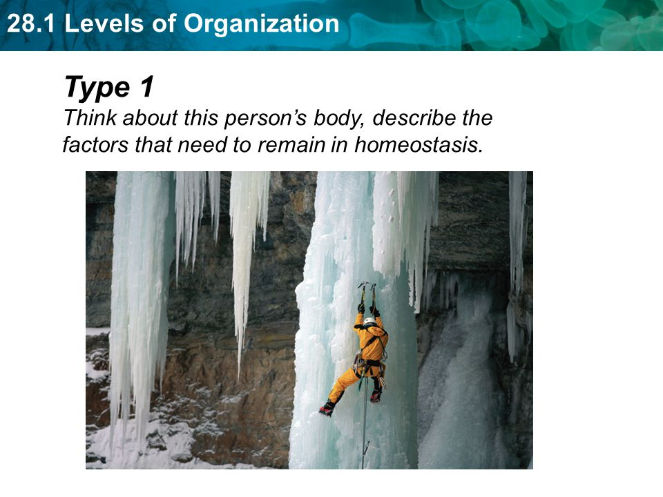 Type 1 Think about this person's body, describe the factors that need to remain in homeostasis.