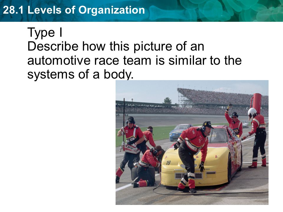 Type I Describe how this picture of an automotive race team is similar to the systems of a body.