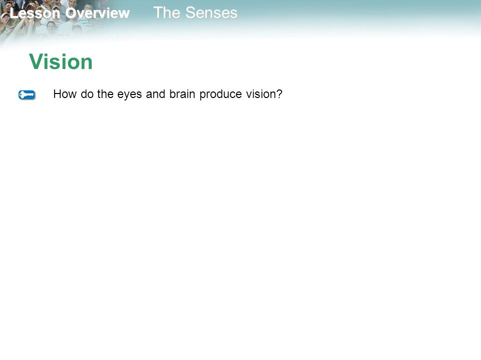 Vision How do the eyes and brain produce vision