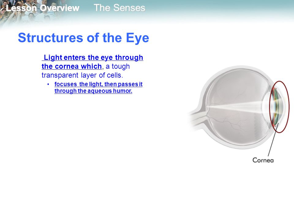 Structures of the Eye Light enters the eye through the cornea which, a tough transparent layer of cells.