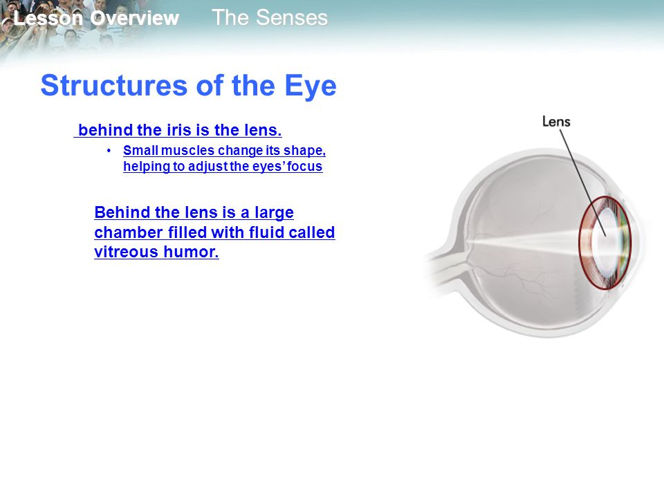 Structures of the Eye behind the iris is the lens.