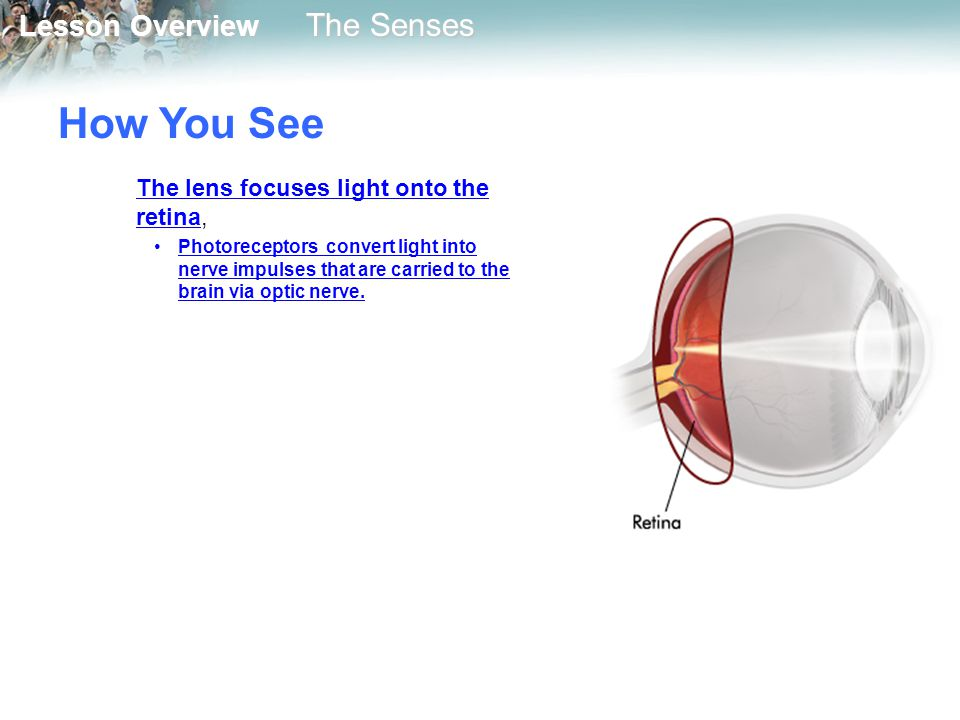 How You See The lens focuses light onto the retina,