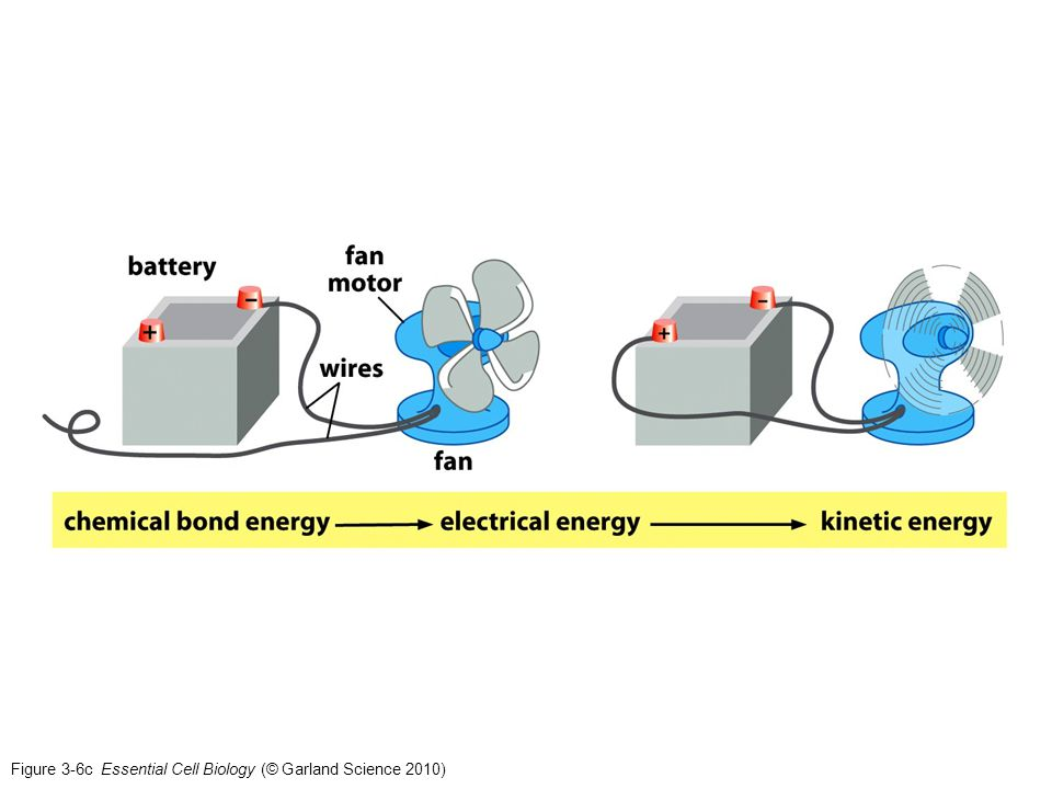 Fan diagram biology basic guide wiring diagram energy catalysis and biosynthesis ppt download rh slideplayer com glycolysis diagram biology prentice hall biology diagrams ccuart Images