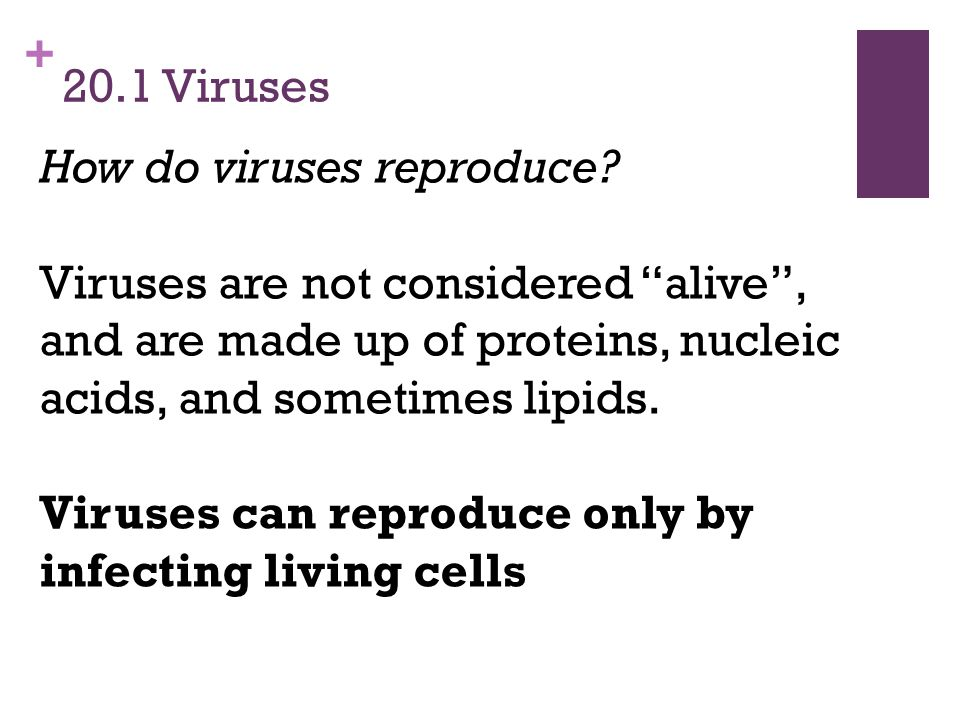 20.1 Viruses How do viruses reproduce Viruses are not considered alive , and are made up of proteins, nucleic acids, and sometimes lipids.