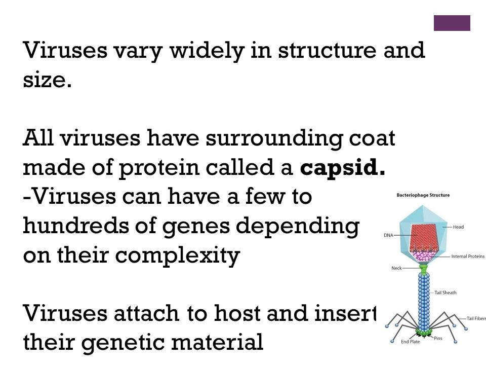 Viruses vary widely in structure and size.