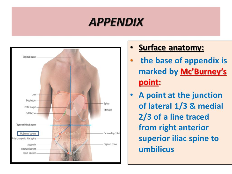 Anatomy Of The Large Intestine Ppt Video Online Download