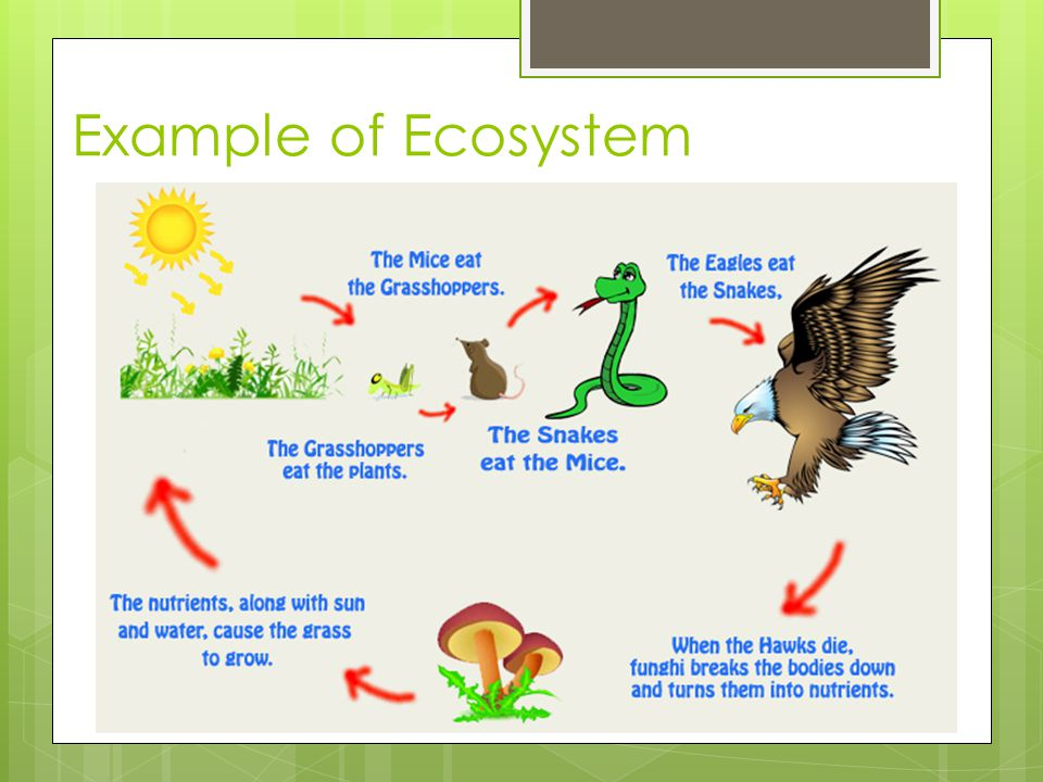 Ecosystems What Is Ecology Ppt Video Online Download