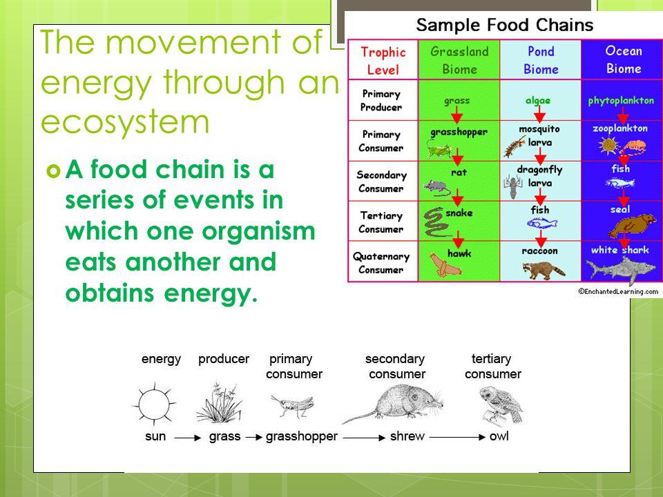 Organisms Break Down Food In Order To