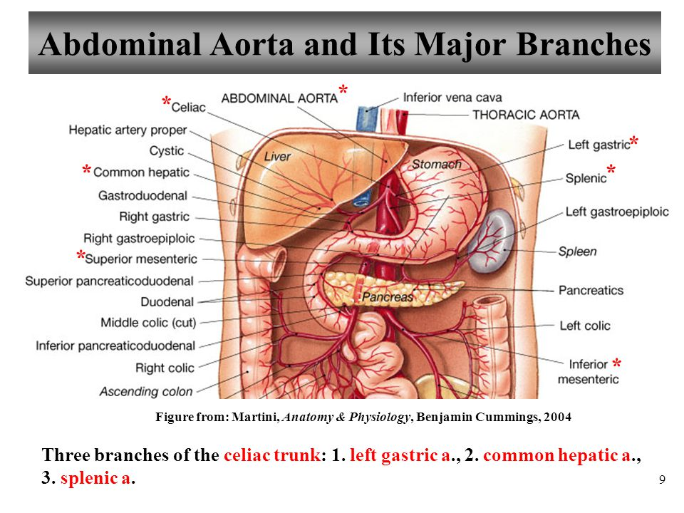 name the major branches of the abdominal aorta