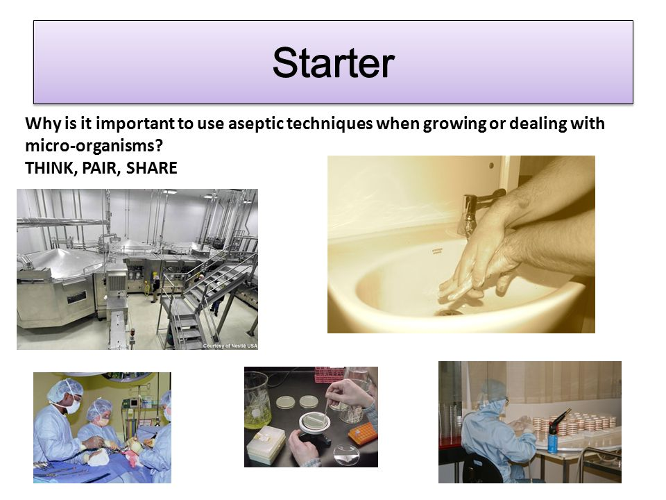 Starter Why is it important to use aseptic techniques when growing or dealing with micro-organisms