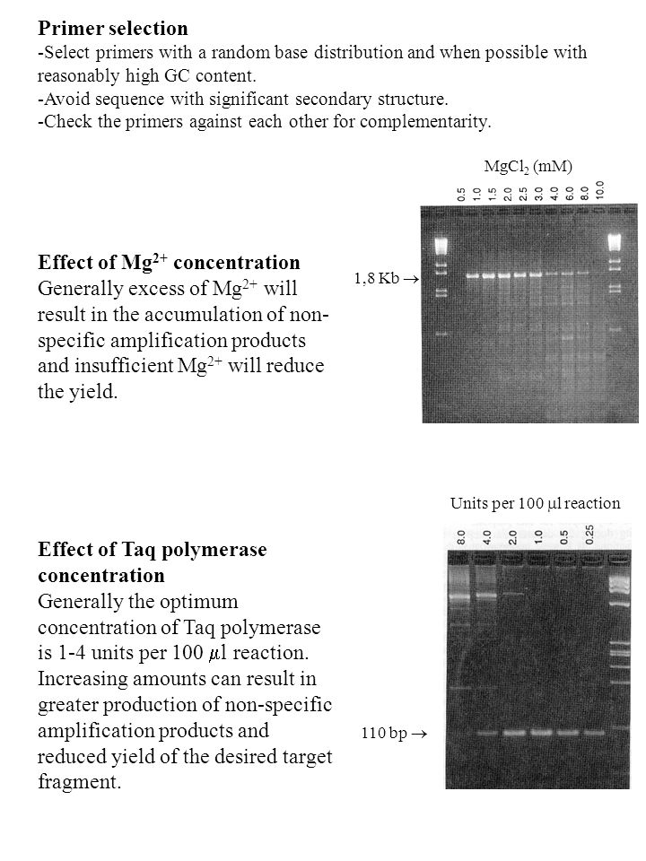 Effect of Mg2+ concentration