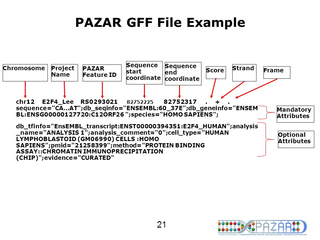 PAZAR GFF File Example