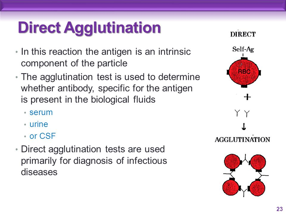 agglutination ppt video online download