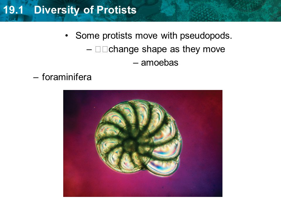 Some protists move with pseudopods. change shape as they move