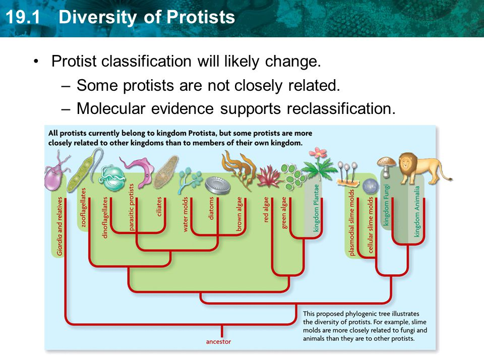 Protist classification will likely change.