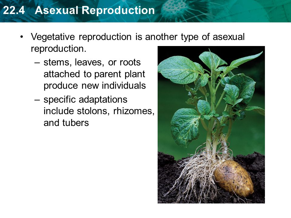 Types of asexual plants