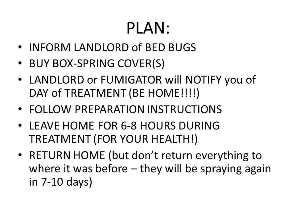 PLAN: INFORM LANDLORD Of BED BUGS BUY BOX SPRING COVER(S)