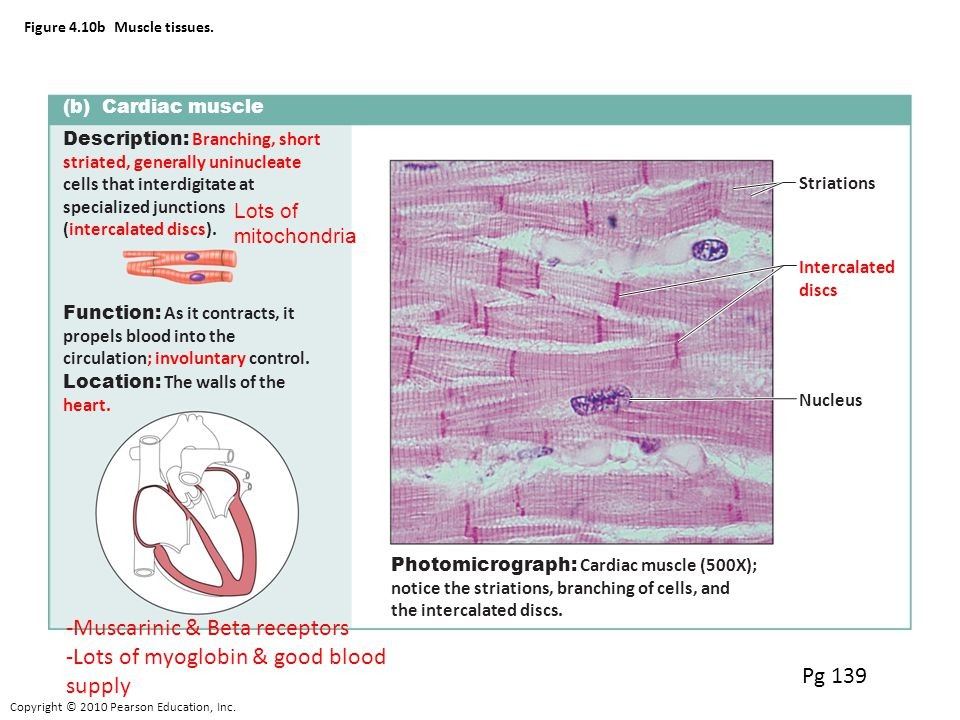 Small Intestine A Skeletal Cardiac Smooth Functions Ppt Video