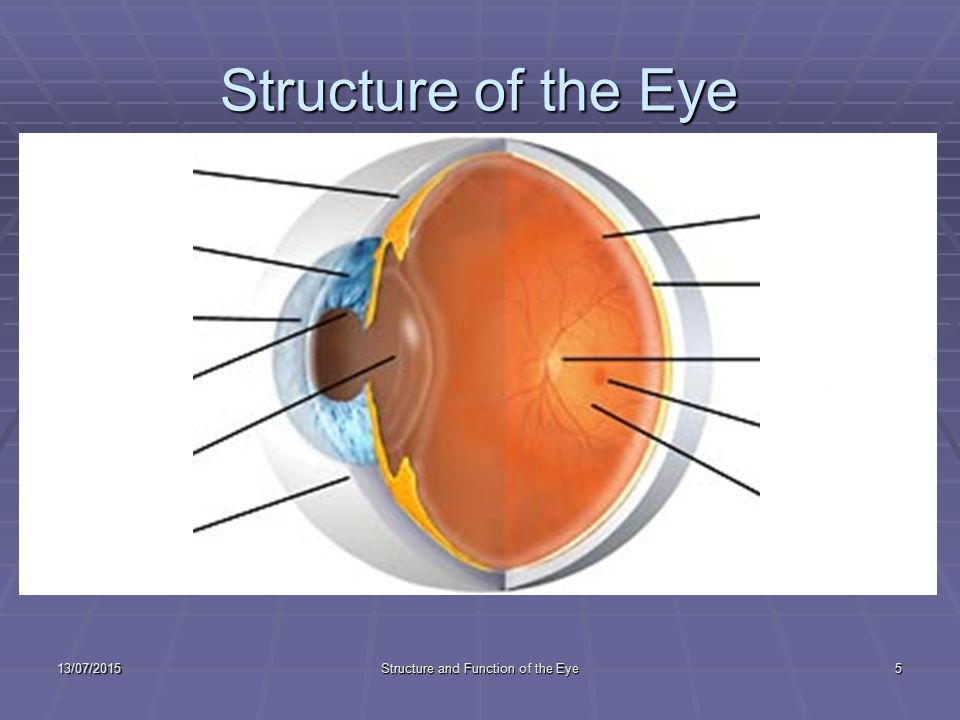 The Structure and Function of the Eye - ppt download