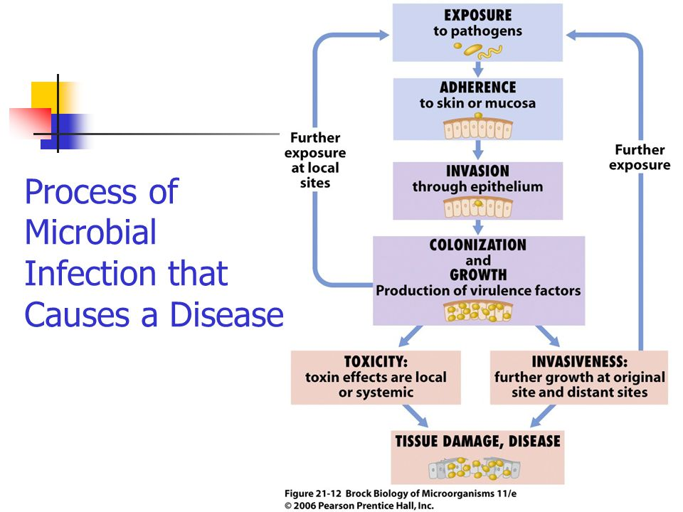 Process of Microbial Infection that Causes a Disease