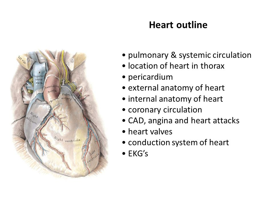 Heart outline pulmonary & systemic circulation - ppt video online ...