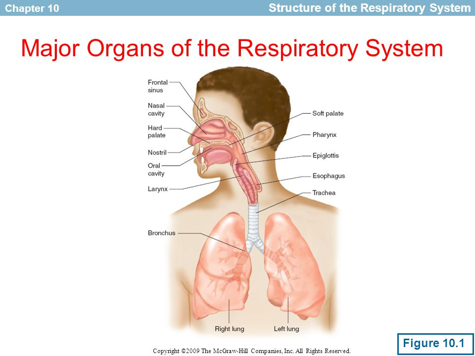 Respiration During Exercise Ppt Download