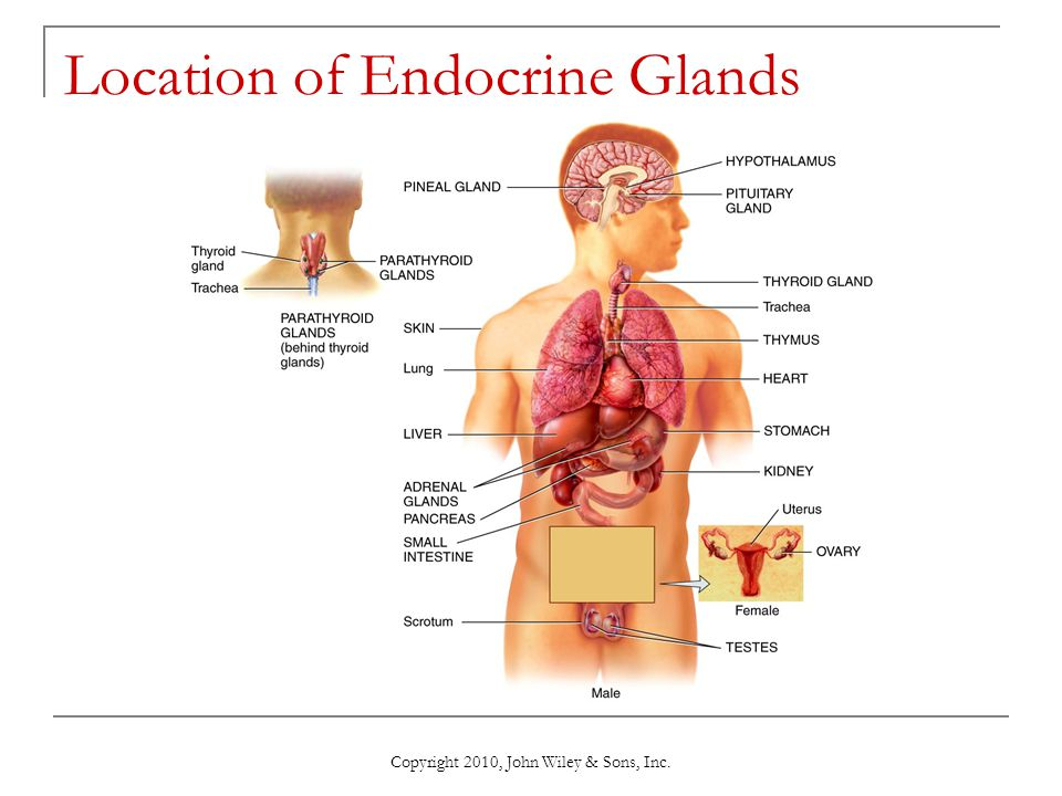 Chapter 13 The Endocrine System - ppt download