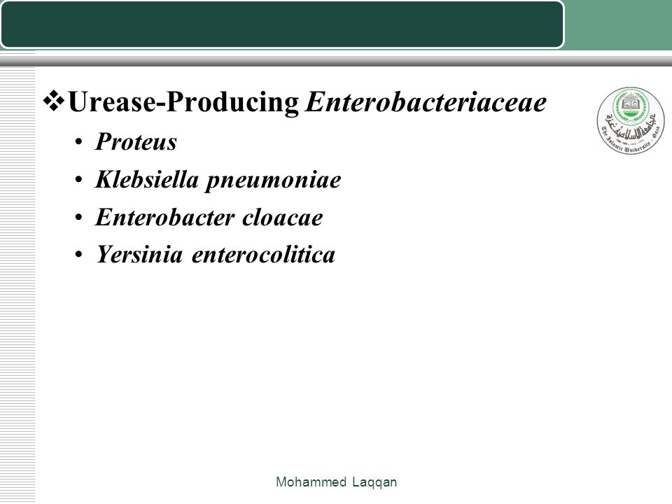 Urease-Producing Enterobacteriaceae