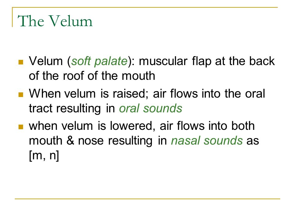 The Velum Velum (soft palate): muscular flap at the back of the roof of the mouth.