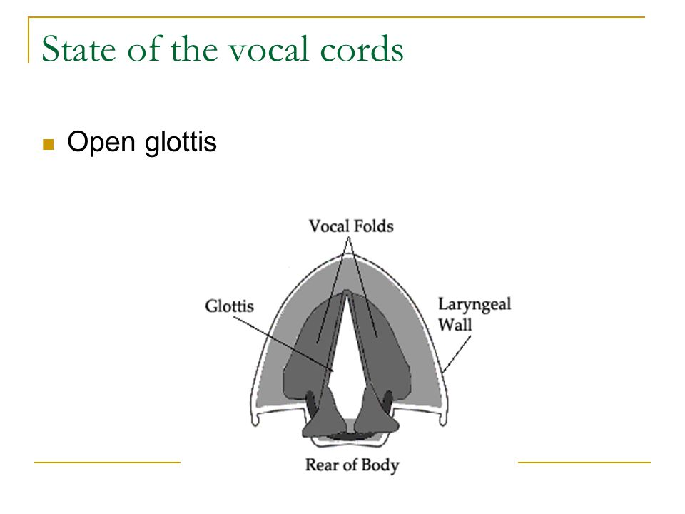 State of the vocal cords