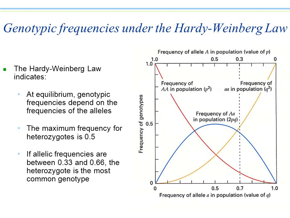 Genotypic frequencies under the Hardy-Weinberg Law