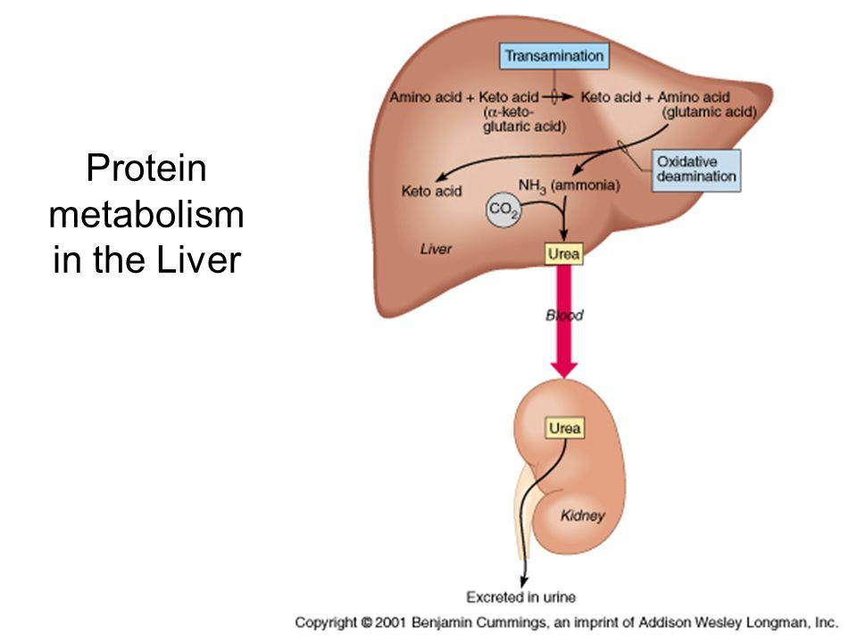 Metabolism Chapter Ppt Video Online Download