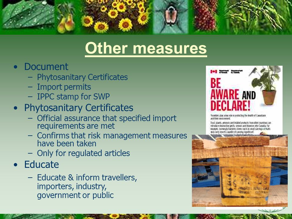 Other measures Document Educate Phytosanitary Certificates