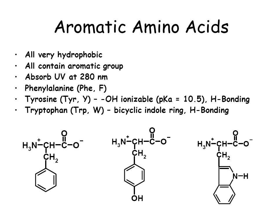 aliphatic and aromatic amino acids