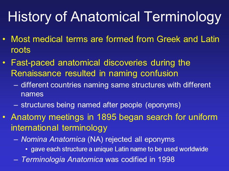 Anatomy During The Renaissance Choice Image Human Anatomy Organs