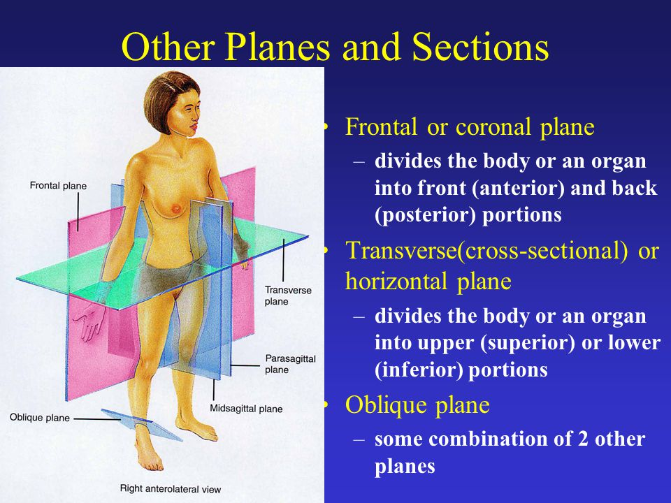 Human Anatomy Physiology I Bio Ppt Video Online Download