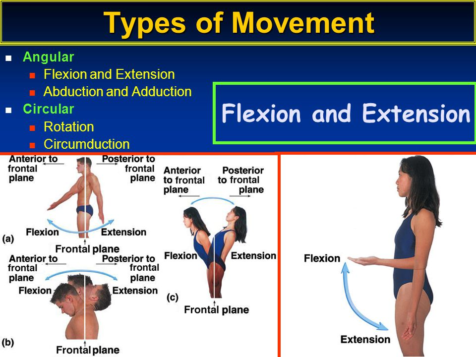 Types of Movement Flexion and Extension Angular Flexion and Extension