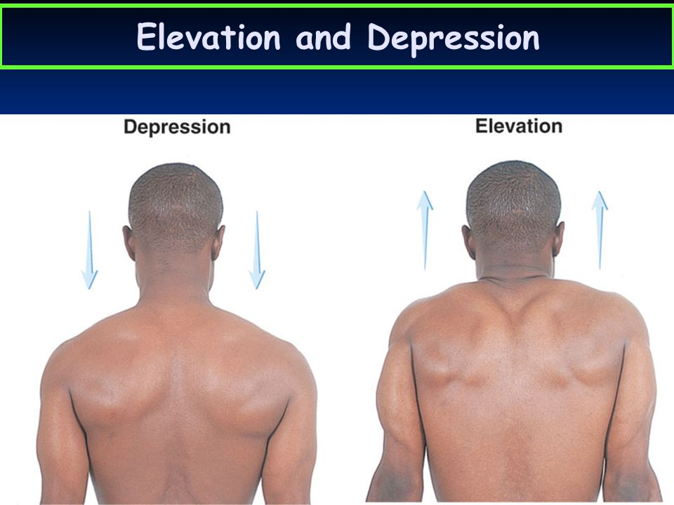 Elevation and Depression