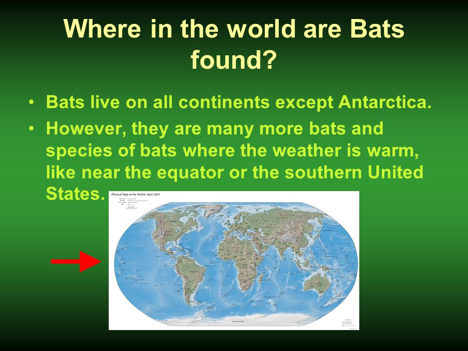 Stuff You Never Knew About Bats Ppt Video Online Download