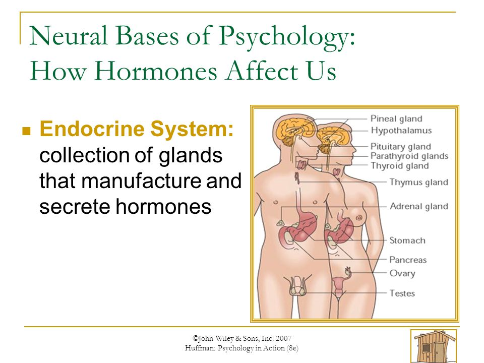 Neural Bases of Psychology: How Hormones Affect Us