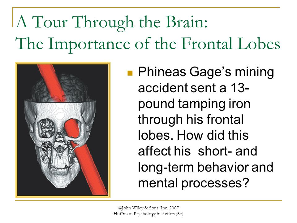 A Tour Through the Brain: The Importance of the Frontal Lobes
