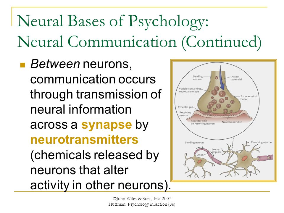 Neural Bases of Psychology: Neural Communication (Continued)