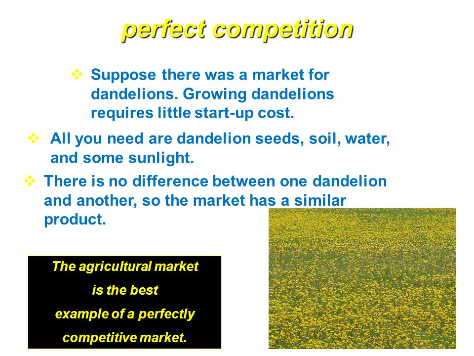 what is an example of a perfectly competitive market