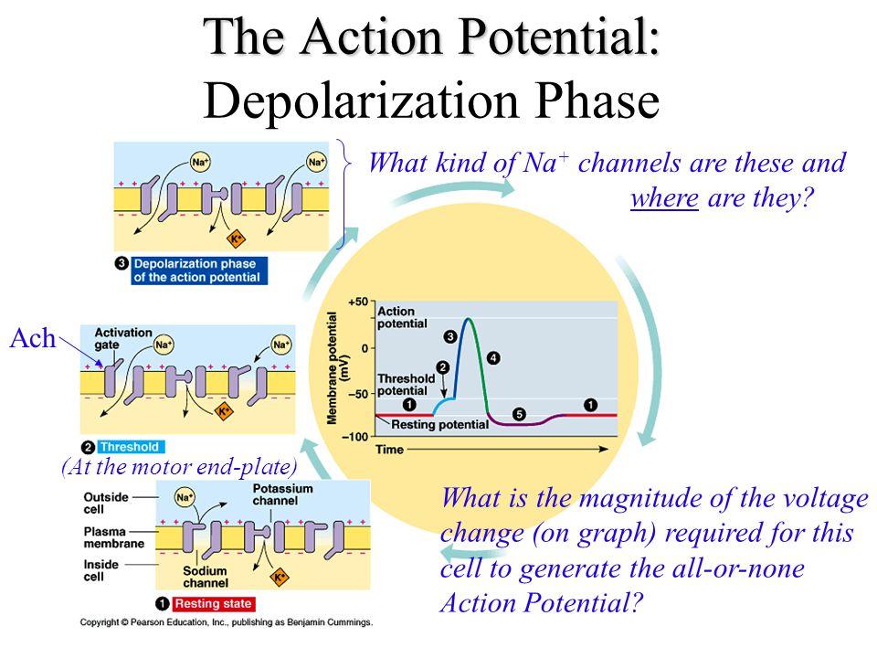 Details of Depolarization, Rep...