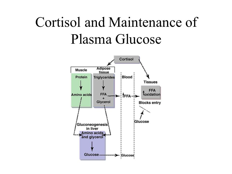 Cortisol and Maintenance of Plasma Glucose