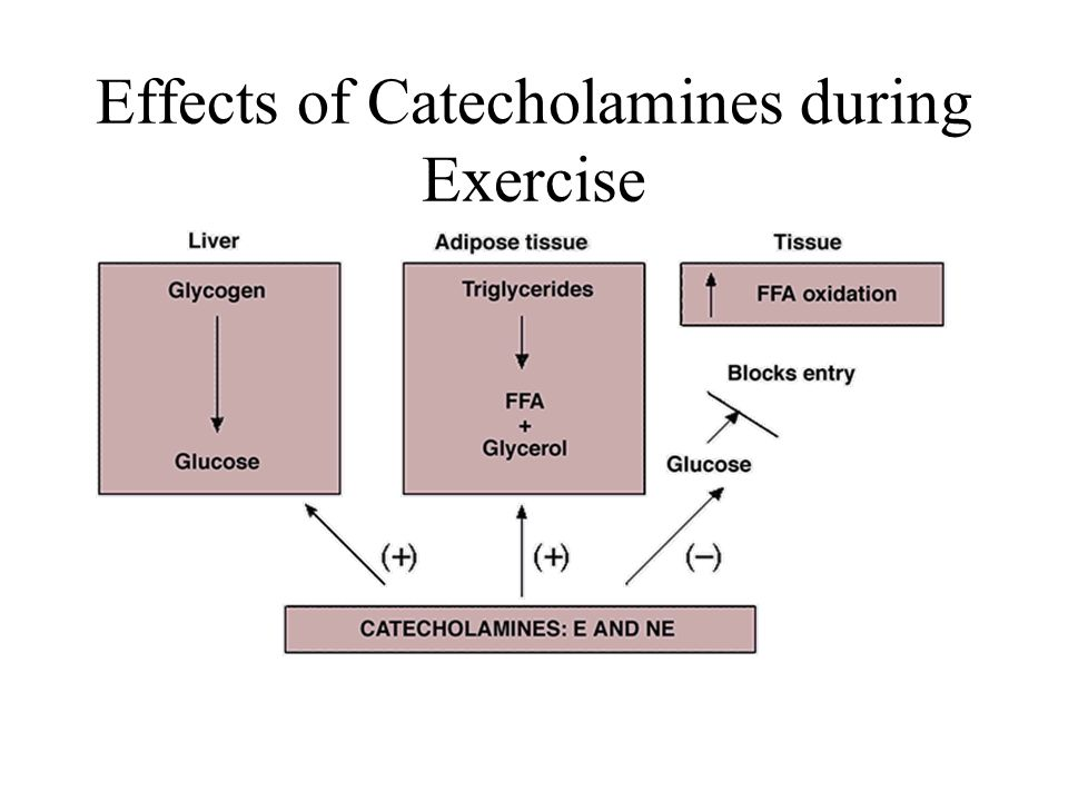Effects of Catecholamines during Exercise