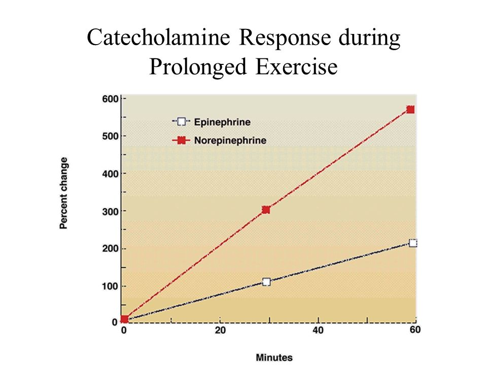 Catecholamine Response during Prolonged Exercise