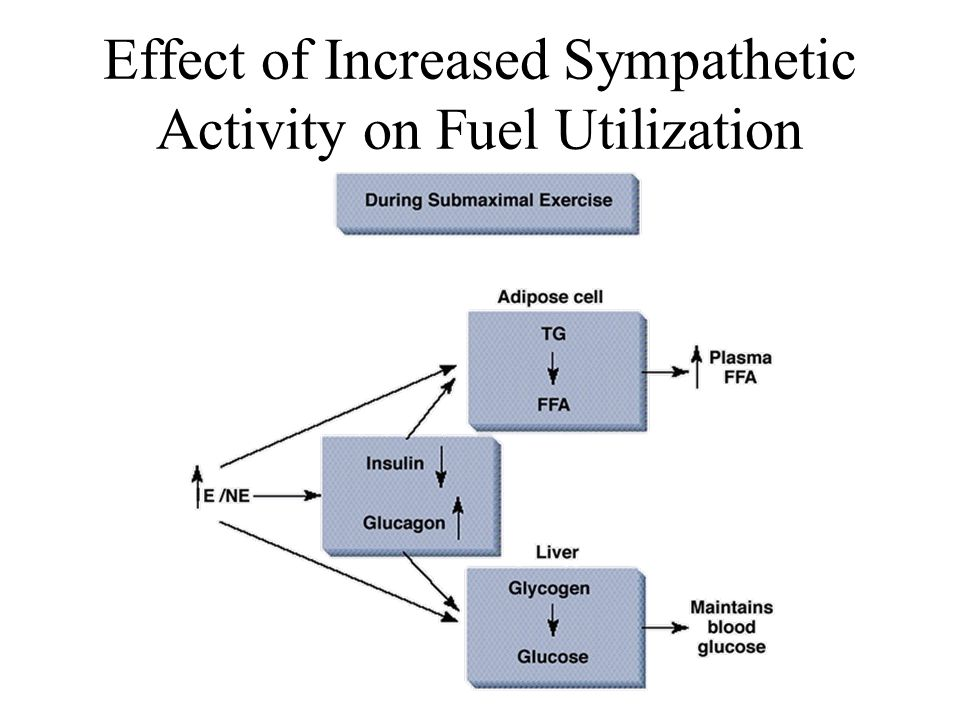 Effect of Increased Sympathetic Activity on Fuel Utilization