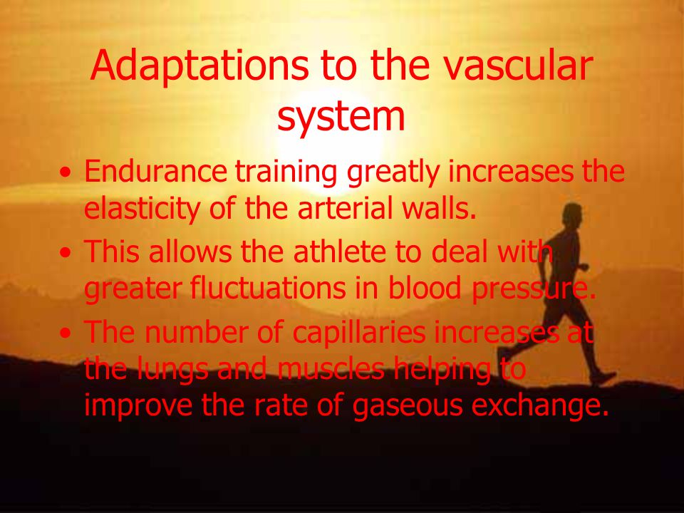 Adaptations to the vascular system